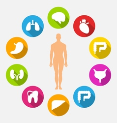 silhouette male and internal human organs vector image