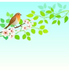 Spring Robin vector image