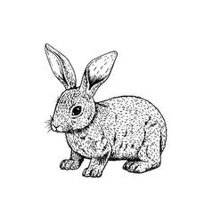 Hand drawn rabbit black white sketch vector