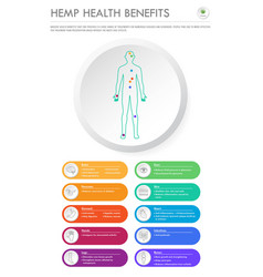 Hemp health benefits vertical business infographic vector
