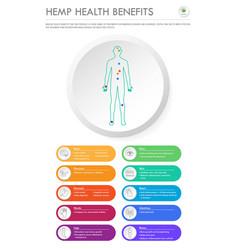 Hemp health benefits vertical business infographic vector