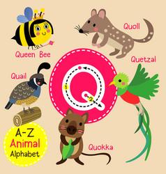 Letter q tracing quail queen bee quetzal quokka vector