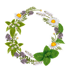 Round ornament of herbs and flowers for labels of vector