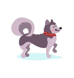 siberian husky dog character colorful vector image