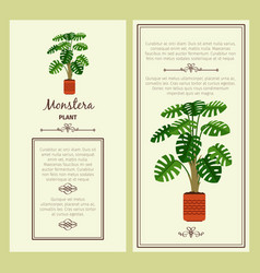 greeting card with monstera plant vector image vector image