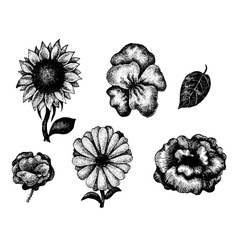 Collection of black and white hand drawn flowers vector