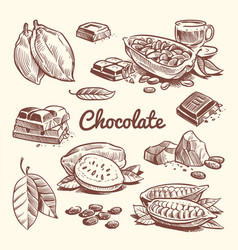 Hand drawn cacao leaves cocoa seeds sweet vector