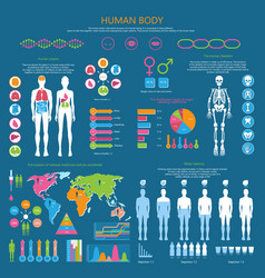 Human body detailed infographic with statistics vector