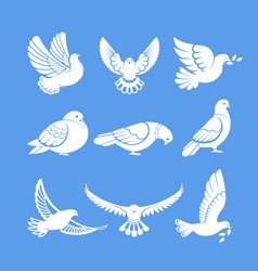 pigeons or white dove birds flying wings vector image