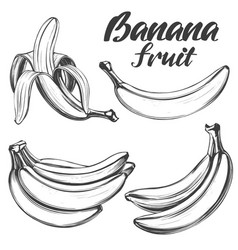bananas fruit set hand drawn vector image