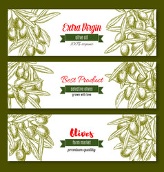 Banners for extra virgin olive oil product vector