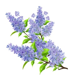 Branch of lilac with leaves isolated vector