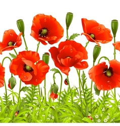 red flower and green grass vector image