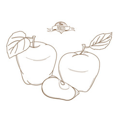 Outline hand drawn apple flat style thin line vector