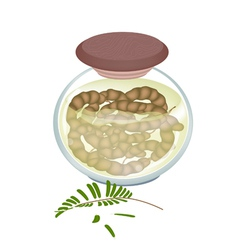 Preserved Tamarinds in A jar on White Background vector