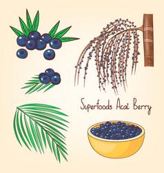 Acai berries set with tree and leaves superfoods vector