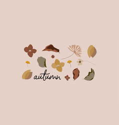 botanical autumn set vector image