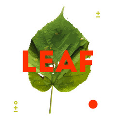 designer element of natural leave herb vector image