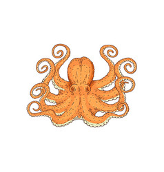 hand drawn designed yellow sea octopus element for vector image