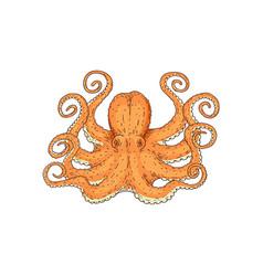 hand drawn designed yellow sea octopus element vector image