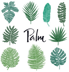 set green palm leaves hand drawing isolated object vector image