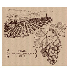 Vineyard vector