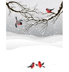 Winter background with birds bullfinch vector