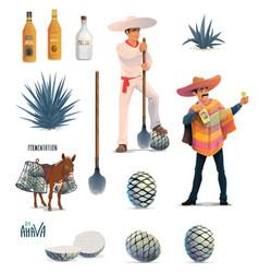 agave tequila production blue agava and bottles vector image