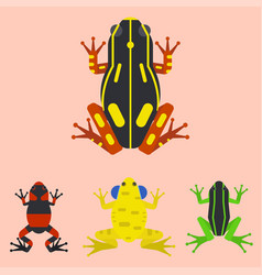 frog cartoon tropical animal cartoon amphibian vector image