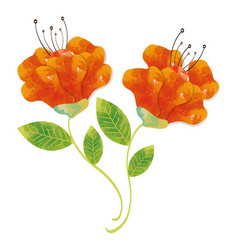Orange flowers colorwater paint vector