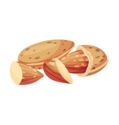 Whole almond kernel with broken nutshell vector