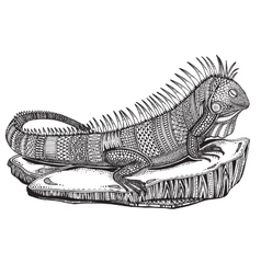 Hand drawn graphic ornate iguana on a stone vector image vector image