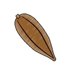 Cocoa delicious fruit vector