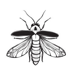 Firefly Insect Black Inky Drawing vector