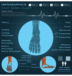 Foot Bone Infographic Infocharts Health And vector