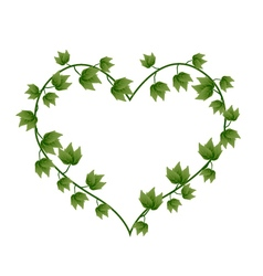 Ivy Vine in A Beautiful Heart Shape vector image