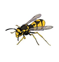 Sketch waspdetailed vector