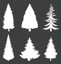 white silhouettes 6 pine trees on black vector image