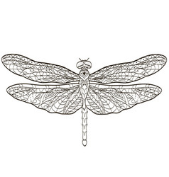 coloring dragonfly insect for adults vector image