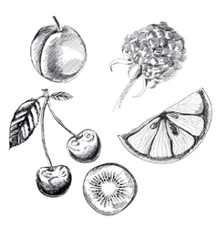 Collection of highly detailed hand drawn fruits vector