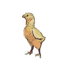 Doodle chicken vector