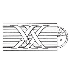 Modern enrichment torus moulding net work vintage vector