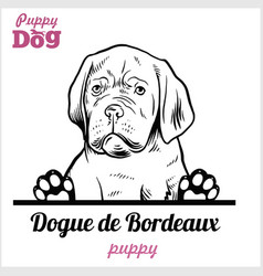 Puppy dogue de bordeaux - peeking dogs - breed vector