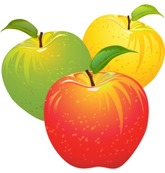 Ripe juicy apples vector