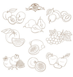Set outline hand drawn fruits with leaves vector