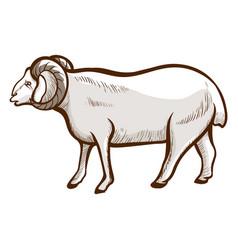 Sheep hand drawn icon domestic animal farming vector