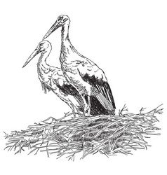 storks couple in the nest vector image