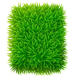 Grassy rectangle vector image vector image