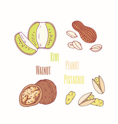 ssweet toppings kiwi peanut walnut and pistachio vector image