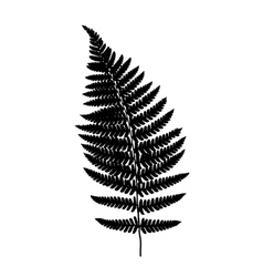 fern frond black silhouette vector image